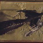 【招待券プレゼント】国立科学博物館で世界に先駆け開催「大英自然史博物館展」