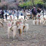 【美術展レビュー】上野恩賜公園の林に200匹のダンボール犬 「DOGTokyo2017」